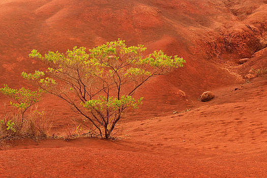 Green Plant on Kauai Red Dirt by Hegde Photos
