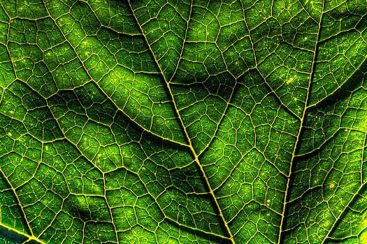 Matt Dobson - Green Pumpkin Leaf