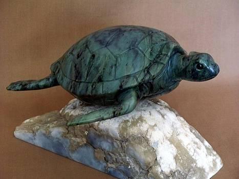 Green Sea Turtle by Jason Nelson