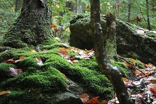Green by Shaileen Landsberg