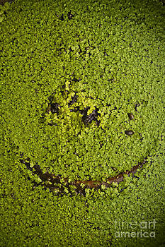 Green Smile by Wittaya Uengsuwanpanich
