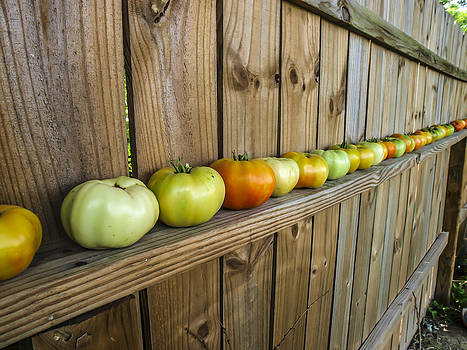 Green Tomatoes by Ralph Brannan