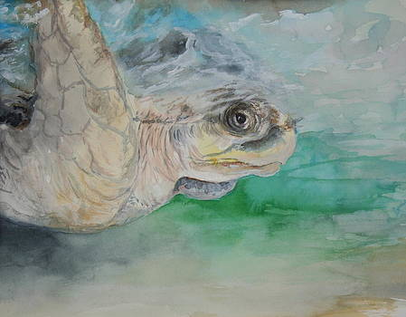 Green Turtle by Jan Lowe