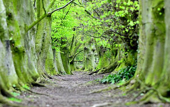 Steven Poulton - Green Wood