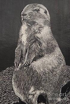 Groundhog by William Ohanlan
