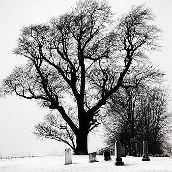 Guardian Tree- Kent County Ontario by Mark Clifford