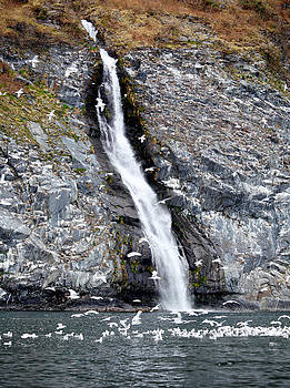 Gulls and Waterfall by Wyatt Rivard