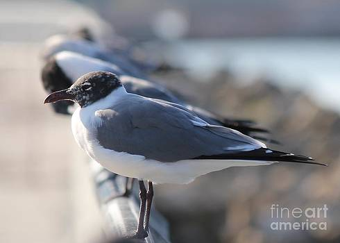 Gulls on a Rail by Theresa Willingham