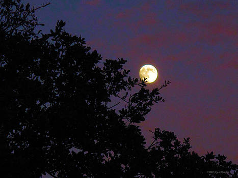 Joyce Dickens - Halloween Moon 2009