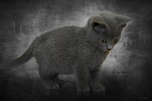 Hannah's Kitten by Ron Jones