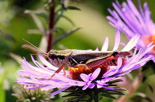 Rosanne Jordan - Happy Grasshopper