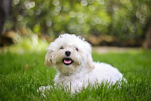 Happy puppy by Asta Viggosdottir