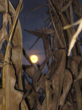 Harvest Moon by Lisa  Bahns