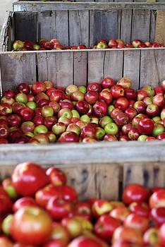 Harvest Time by Linda Mishler