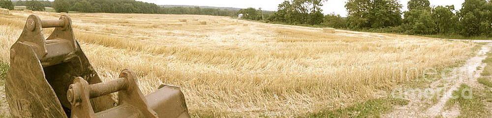 Harvest Time by Trish Hale
