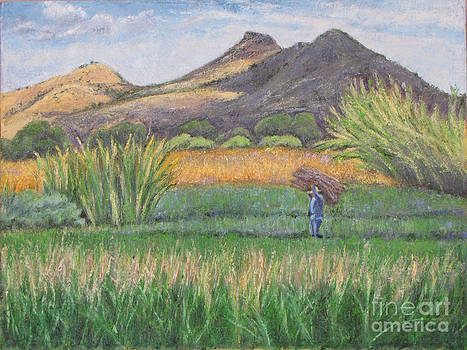 Harvesting in Yagul by Judith Zur