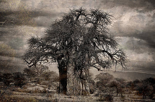 Haunted African Baobabs Tree by Jess Easter