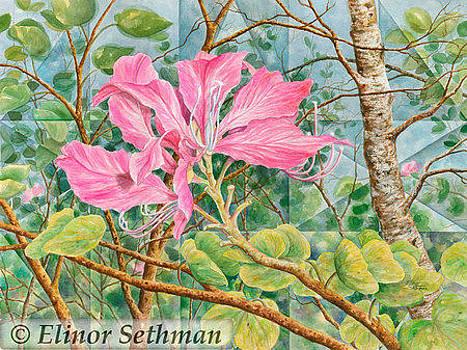 Hawaiian Orchid Tree by Elinor Sethman