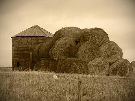 Hay Days  by  Tricia Mccoo