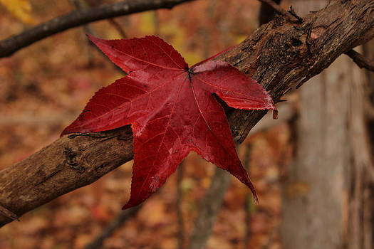 Hello Red by Bob Whitt