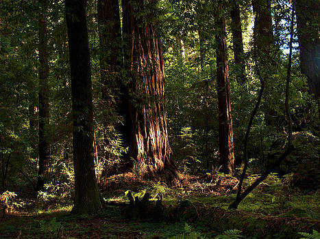 Henry Cowell Redwoods Santa Cruz California Landscape photography Larry Darnell by Larry Darnell