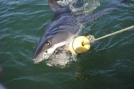 Here Fishy Fishy by Heather Jett