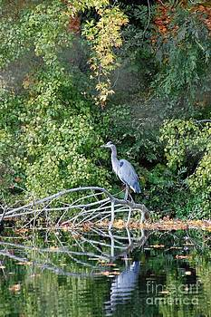 Heron by Marsha Thornton