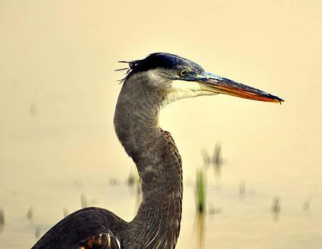Marty Koch - Heron one