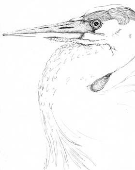 Heron by Sara Bell