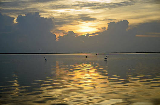 Herons at low tide by Ken  Collette