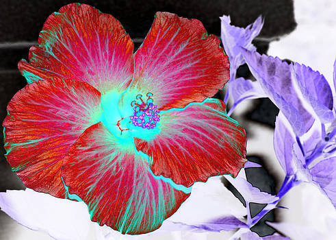 Hibiscus In Abstract by Lawrence Ott