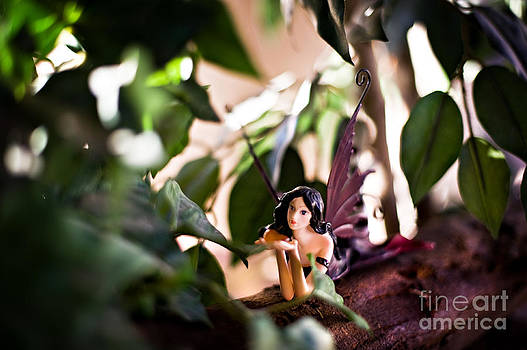 Hidden fairy on a log by Angelina Cornidez
