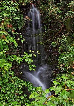 Hidden Falls by Daryl Hanauer