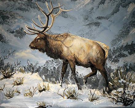 High country bull by Scott Thompson