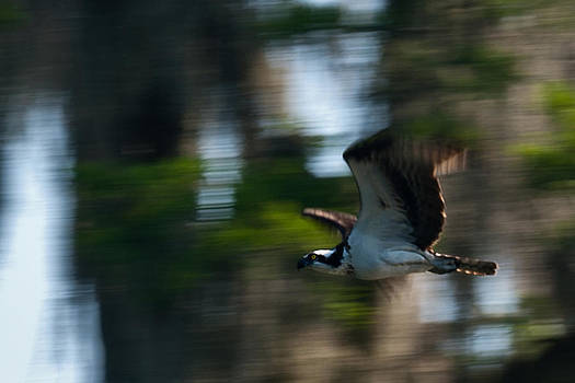 High Speed Pass by Frank Feliciano