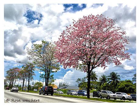 Highway Bloom by Rosa Mahabir