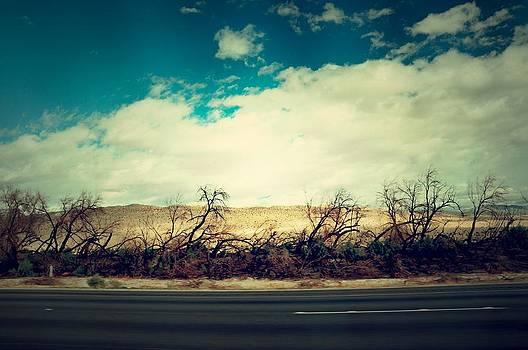 Highway Trees by Kelsey Horne