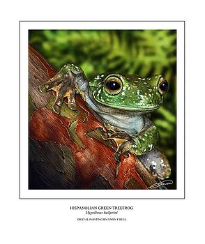 Hispanolian Green Treefrog by Owen Bell