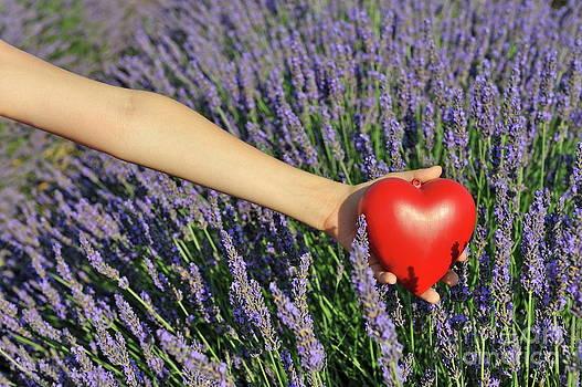Sami Sarkis - Holding heartshape in lavender field