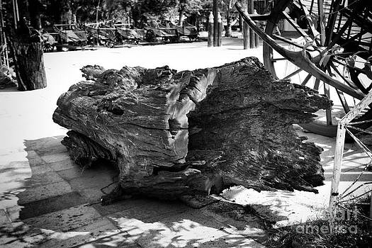 Hollow Log by Thanh Tran