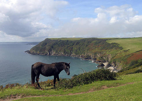 Kurt Van Wagner - Horse along Coastal Path Cornwall