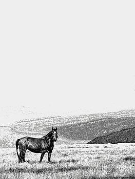 Horse by Pravin Tripathi