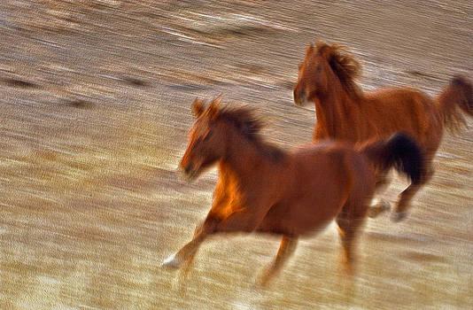 James Steele - Horse Race