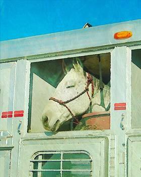 Ginger Denning - Horse Ride
