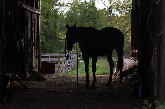 Horse silhoutte by Cheryl Cencich