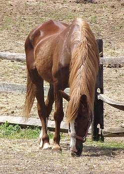 Horsey Chowdown by Michael Degenhardt