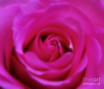 Andrea Kollo - Hot Pink Lady