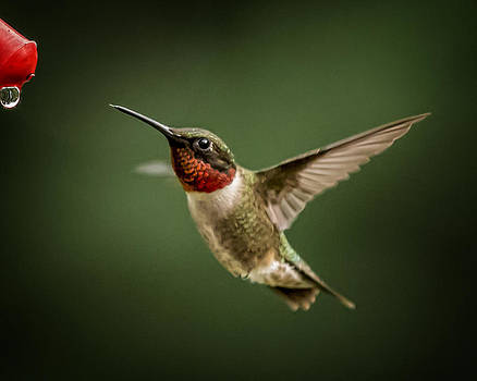 Hummer in the Garden One by Michael Putnam