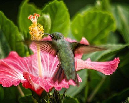 Hummers in the Garden Five by Michael Putnam