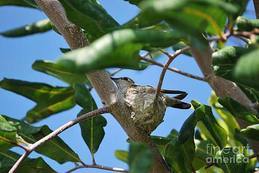 Humming Bird 2 by Stephanie Haertling